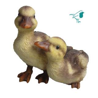 NF Duckling Group D