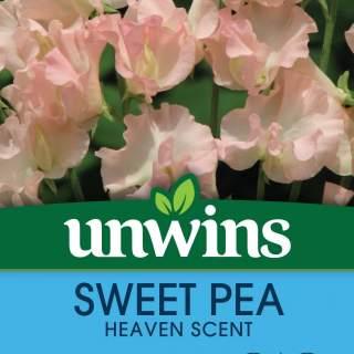 Sweet Pea Heaven Scent