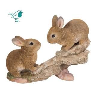 Climbing Baby Rabbits B