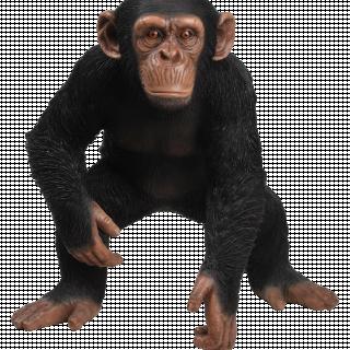 RL Standing Chimpanzee B x 1
