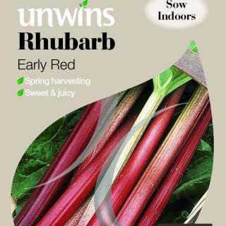 Rhubarb Early Red
