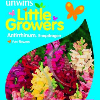 Little Growers Antirrhinum Snapdragon