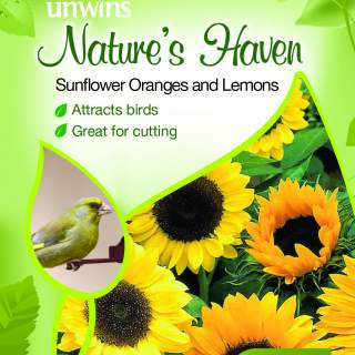 NH Sunflower Oranges and Lemons