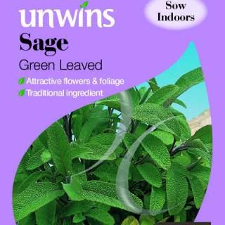 Herb Sage Green Leaved