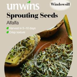 Sprouting Seeds Alfalfa