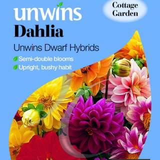 Dahlia Unwins Dwarf Hybrids