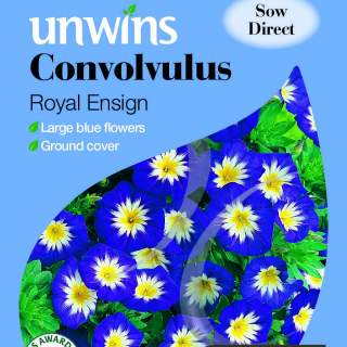 Convolvulus Royal Ensign