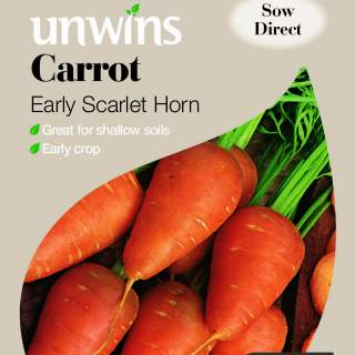 Carrot Early Scarlet Horn