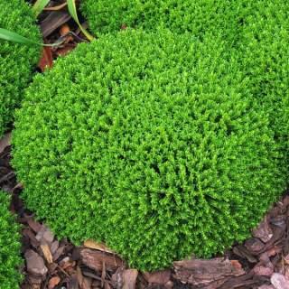 Hebe Emerald Gem Green Globe
