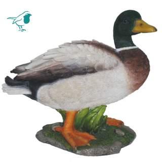 Real Life Mallard Duck A
