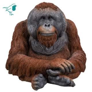 RL Orangutan A