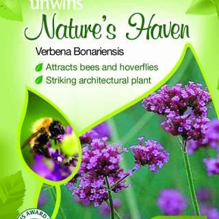 NH Verbena Bonariensis