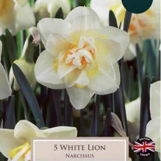 NARCISSI WHITE LION