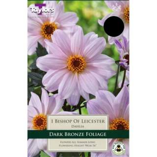 DAHLIA BISHOP OF LEICESTER I