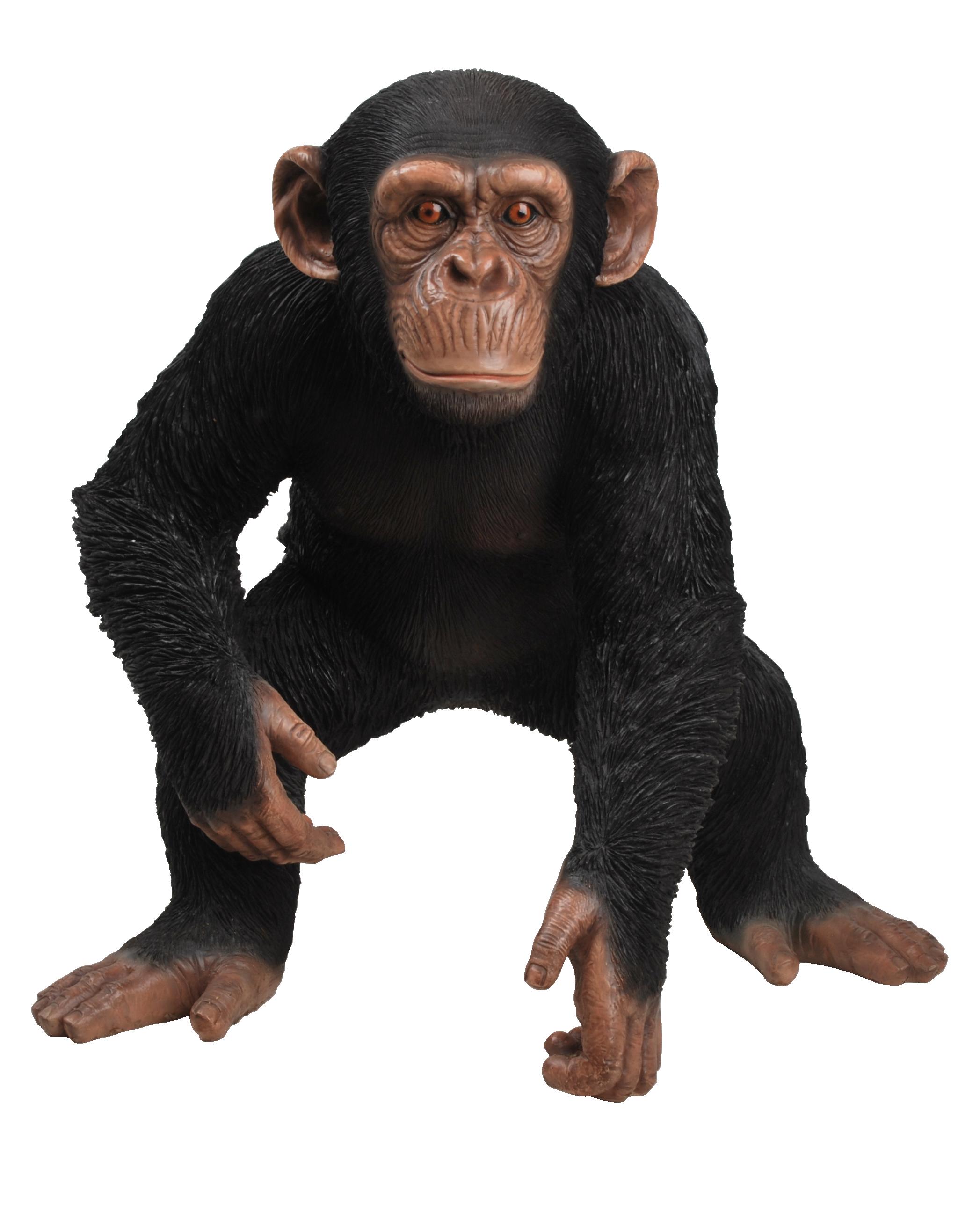 Schimpanse Png